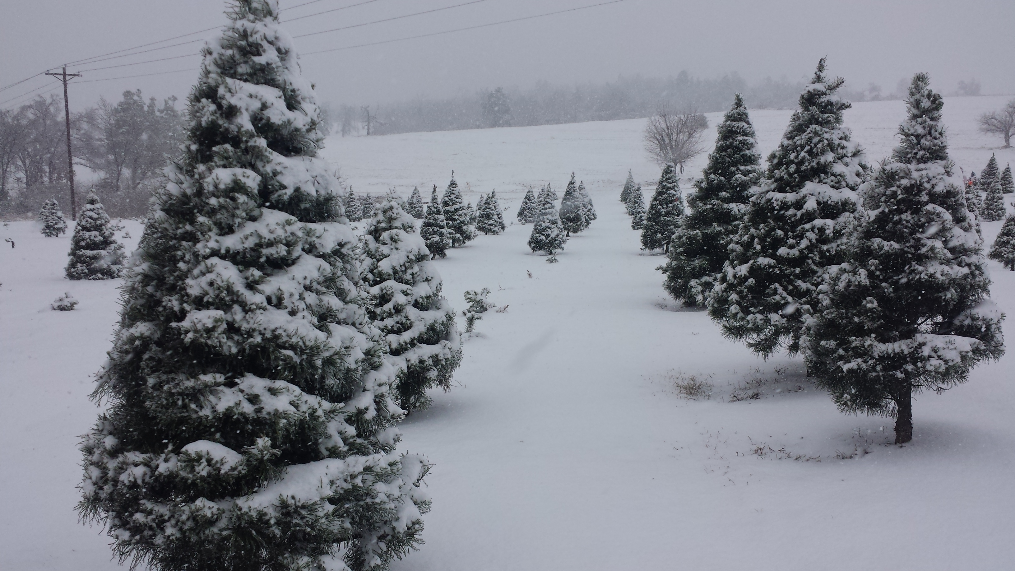 Is December Over for Snow Lovers in PA? – PA Weather Action